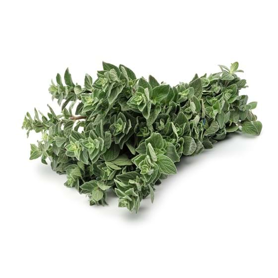 Oregano - Product photo