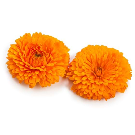 Calendula - Product photo