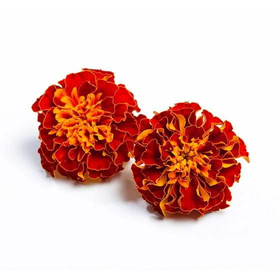 Tagetes - Productfoto