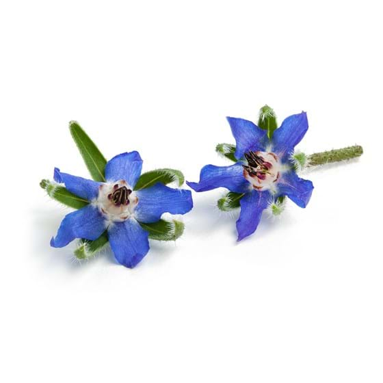 Borage - Productfoto