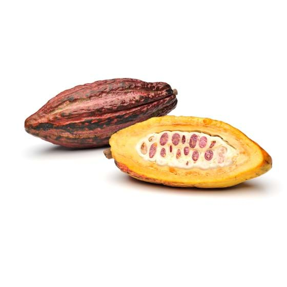 Cacao fruit - Product picture